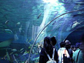 幻想的な海旅をあなたにも!デートにお勧め「しながわ水族館」
