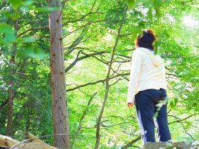 混雑を避けて「高尾山」の春夏秋冬を楽しむ方法