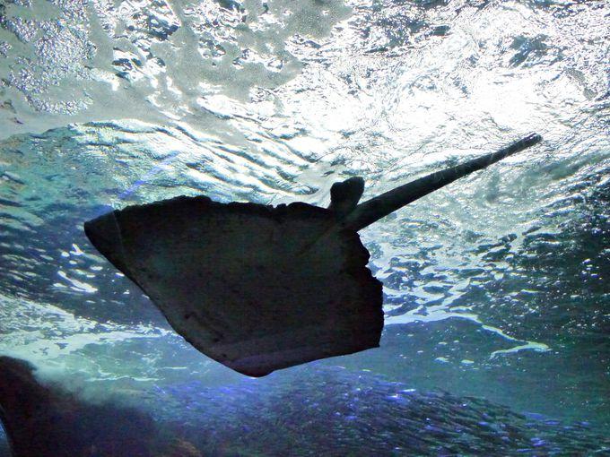 新江ノ島水族館を取り巻く環境