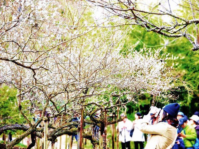 春の梅や桜、秋の紅葉と四季折々の魅力にあふれる園内