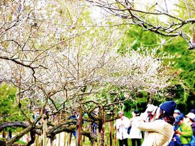 原三溪のセンスが光る名園!風光明媚な横浜「三溪園」