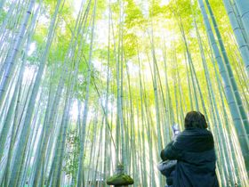 鎌倉フォト!天園ハイキングコースの美しいフォトジェニック