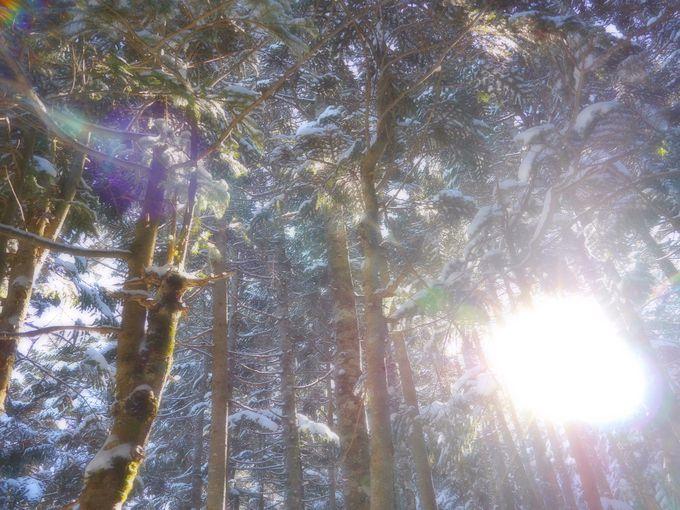 樹氷群フォトは北横岳の風物詩