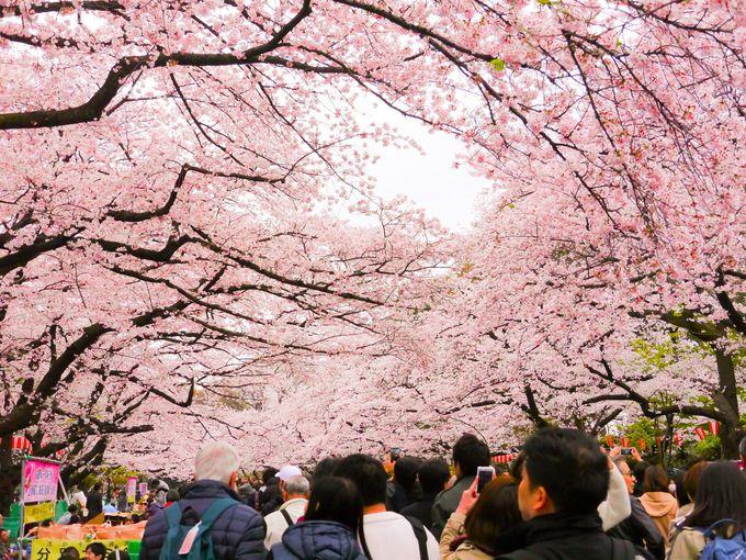 1.桜のトンネル「上野恩賜公園」