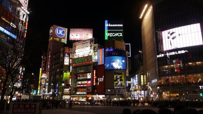 5.渋谷に咲く河津桜