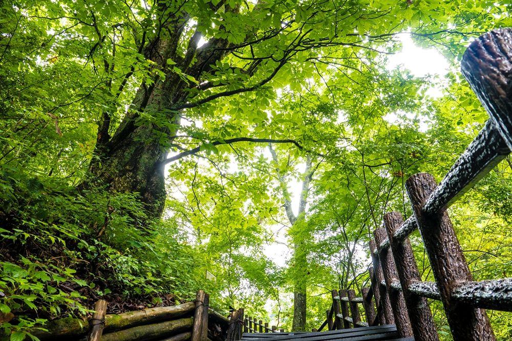 ウッドチップの登山道が楽しい森林セラピーロード