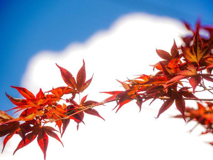 日本で一番美しい紅葉スポット、昇仙峡!