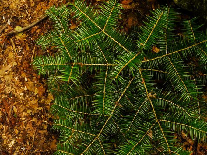 尾白川渓谷の植物たち