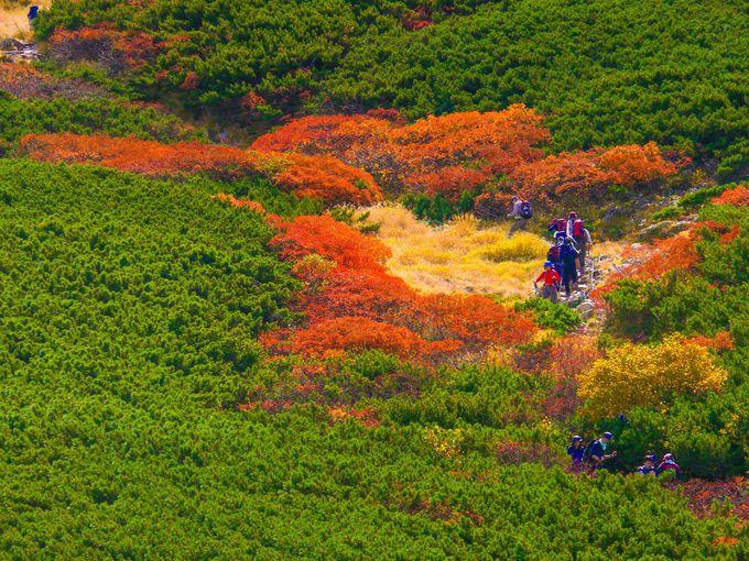 仙丈ヶ岳の高山植物とナナカマドの紅葉