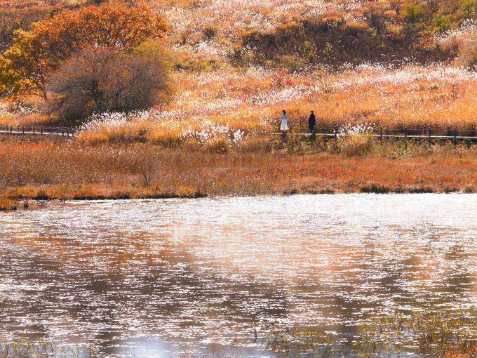 天高く秋空映える八島湿原