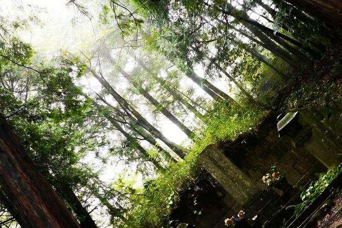 飯能笹、雨乞池、黒田直邦のお墓などバリエーション豊富な縦走路