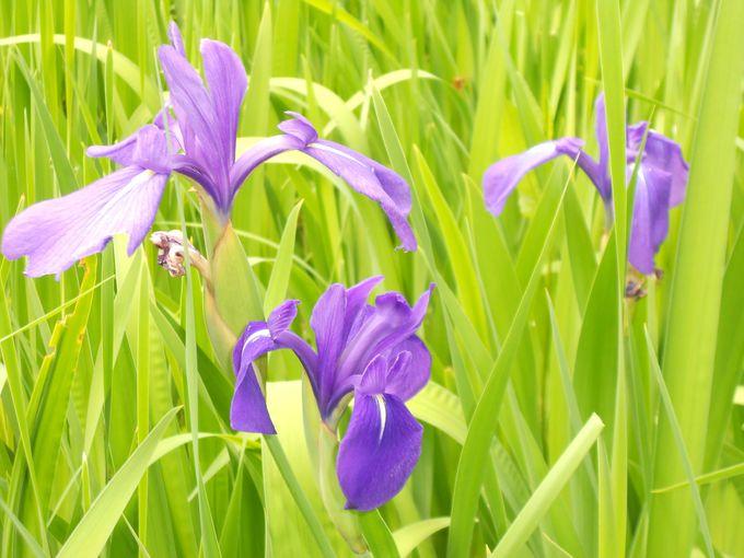 植物園では、散策しながら観賞温室や和庭園、季節の花々の観賞を楽しめる