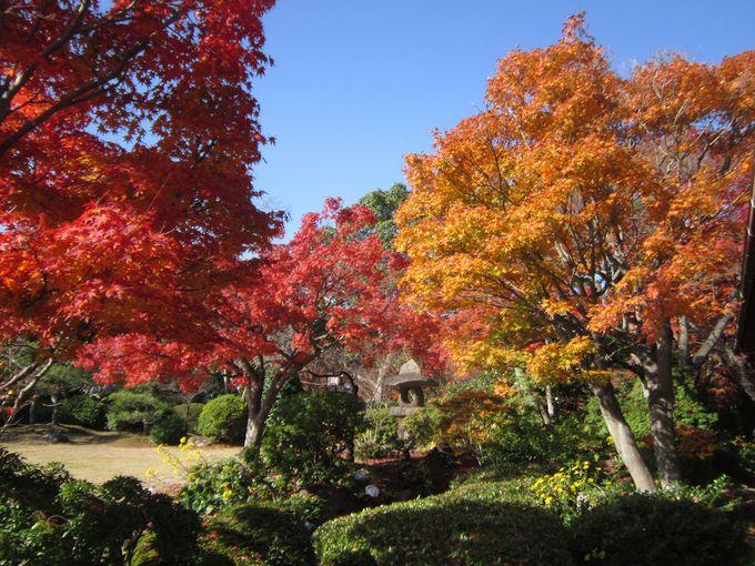 秋には紅葉が楽しめる。幻想的な夜間ライトアップも