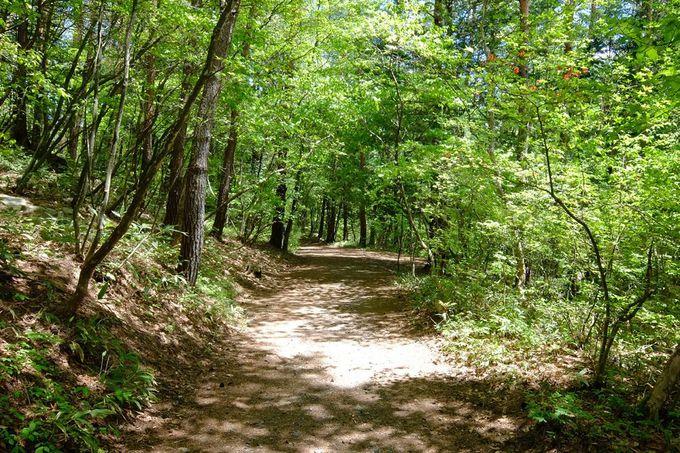 森林浴が心地いい森は動植物の宝庫