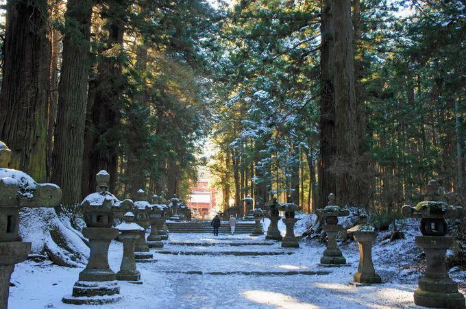 樹齢数百年の巨木が立ち並ぶ荘厳な参道