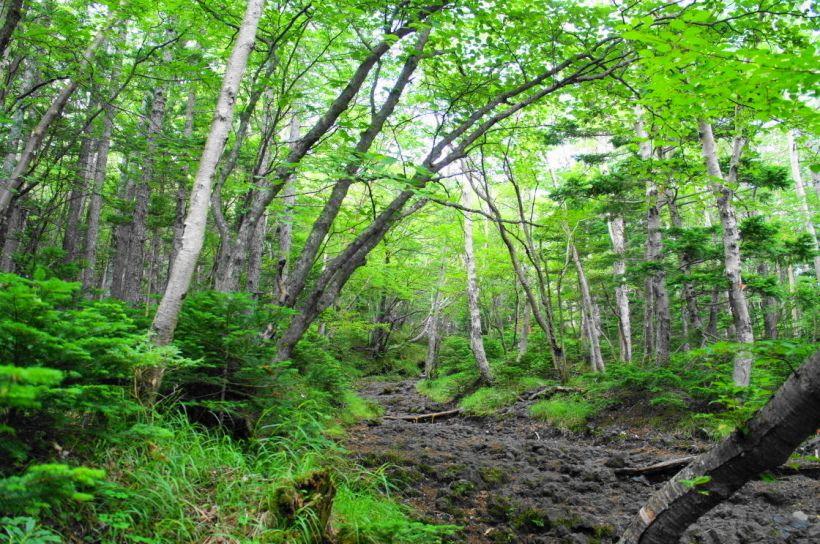 登山道の変化と砂走りが楽しい「須走ルート」(静岡県側)