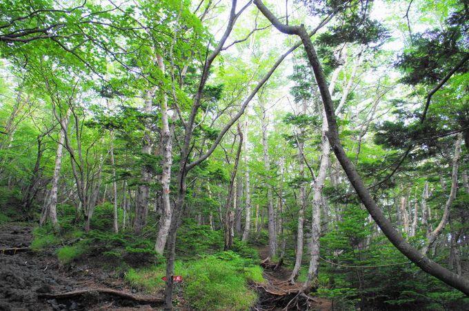 魅力1:原生林の豊かな緑が心地良い!