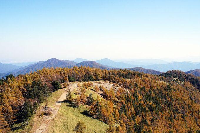 大展望の山頂とカラマツの黄葉が彩る石尾根を見よう!