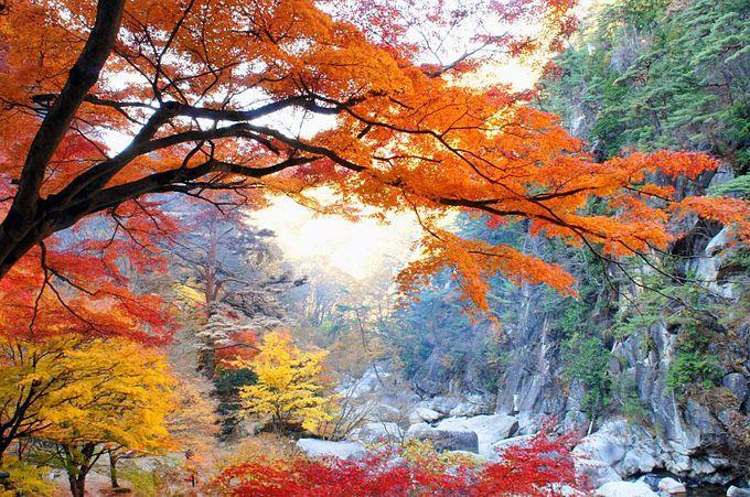 四季折々の彩りと渓谷美を満喫しよう!