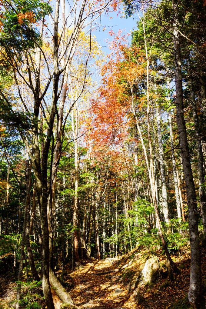 気軽に自然を満喫できる散策コースで紅葉を楽しもう!