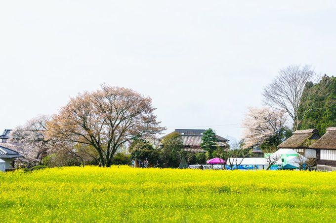 菜の花や歴史的建造物が織りなす原風景!
