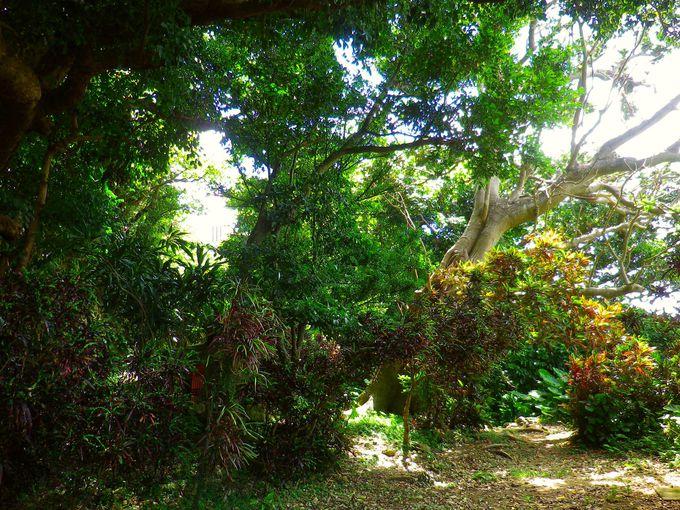 聖域の森、内金城嶽(うち かな ぐすく たき)