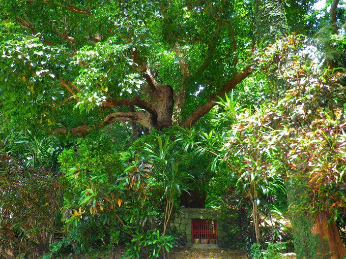 拝所(うがんじゅ)と神聖な木