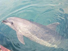 イルカと一緒に泳ごう!淡路島「じゃのひれドルフィンファーム」
