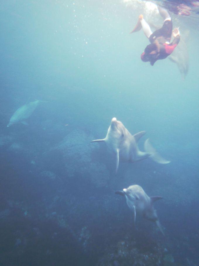 さっそくドルフィンウォッチング!イルカと一緒に泳ぐときはしっかり目を合わせて!
