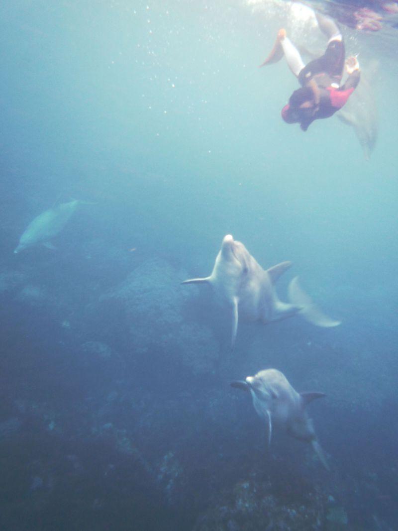 週末行ける!東京御蔵島で野生のイルカと一緒に泳ごう!
