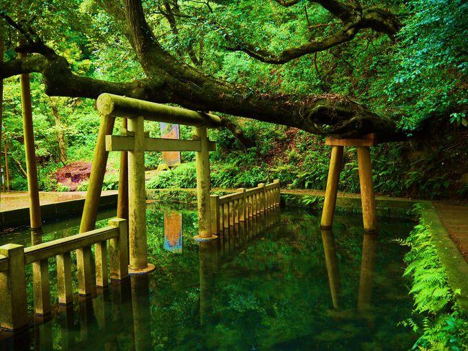関東最古の神社!茨城観光で行きたい「鹿島神宮」