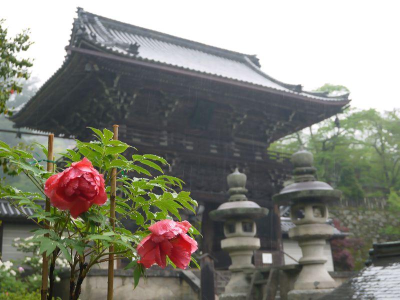 奈良「長谷寺ぼたんまつり」&全長10mの御本尊を足元から参拝!