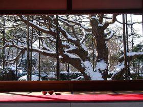 雪に咲く桜、白雪の額縁庭園 京都、大原の美しい銀世界を訪ねて
