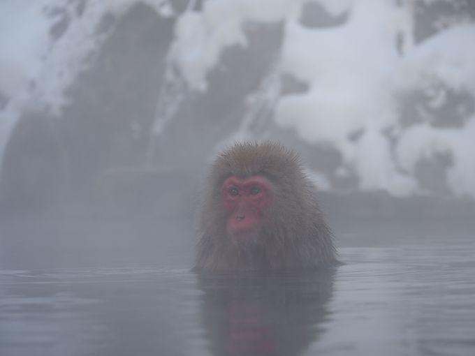 いざ!雪猿!