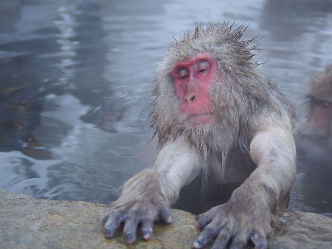 地獄谷温泉に立ち寄り湯