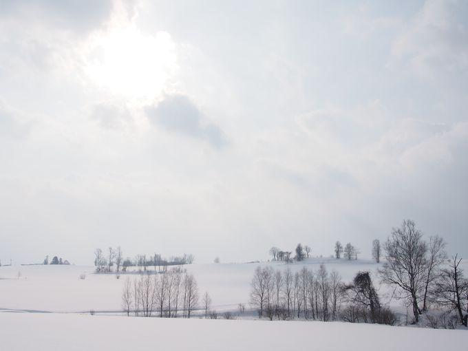 雪原に降り注ぐ光