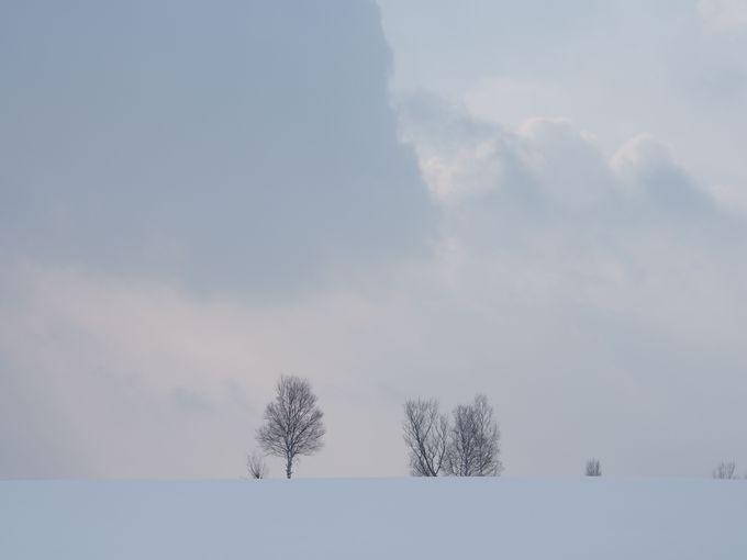 パッチワークの路で大雪原をお散歩