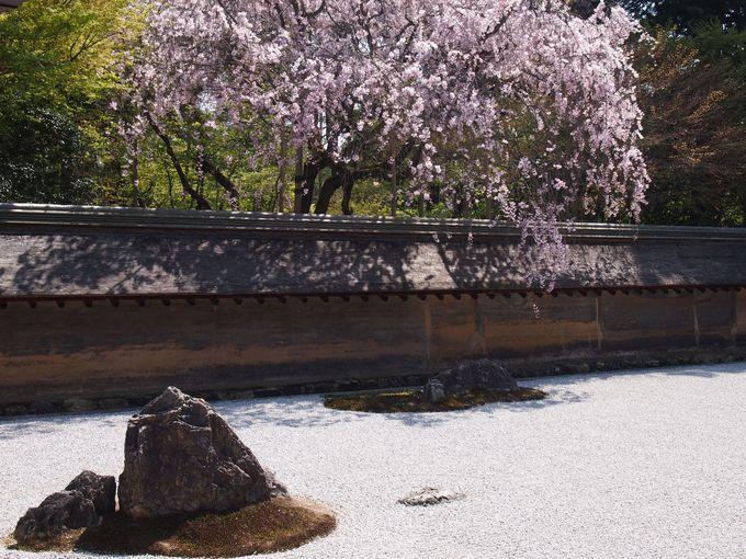 花咲く枯山水 龍安寺