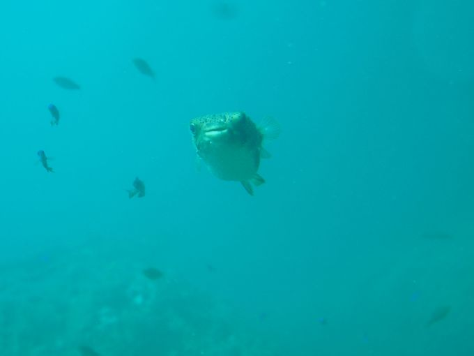 地球は丸い!青い海と空が美しい四国最南端絶景スポット「足摺岬」