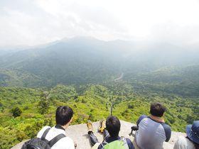 屋久島の人気スポット!白谷雲水峡の奉行杉・太鼓岩コースをトレッキング!