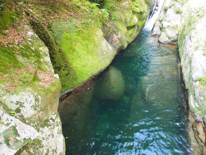 水源の森100選!屋久島・白谷雲水峡の清流