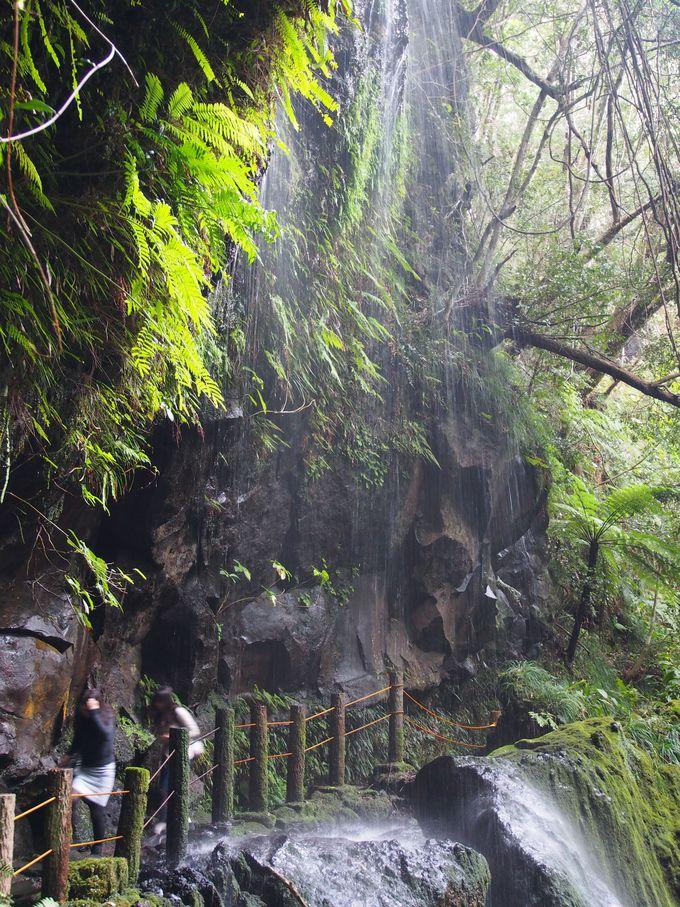 お手軽アドベンチャー!まるでジャングル探検の裏見ヶ滝散策路