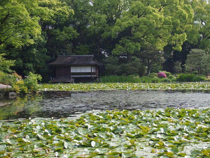 「十三景の三、十一」印月池と漱枕居