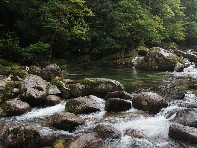 川の水がとにかく綺麗!