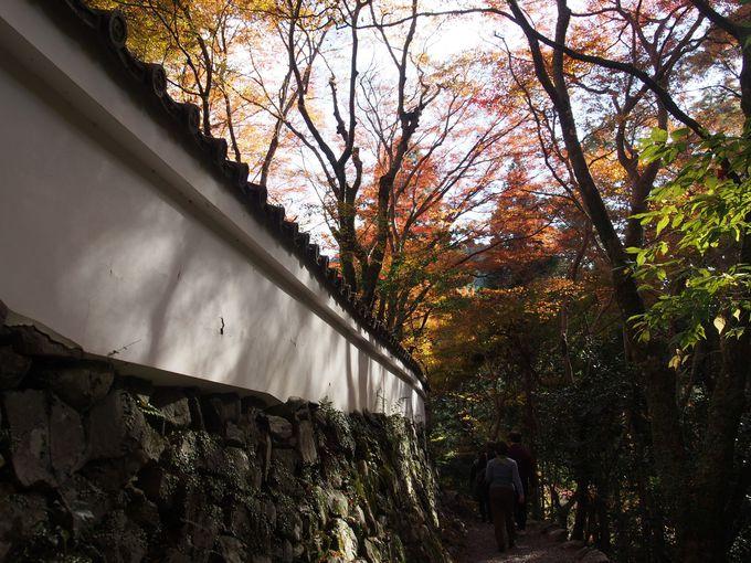 裏参道、石塀と紅葉の赤白の組み合わせ
