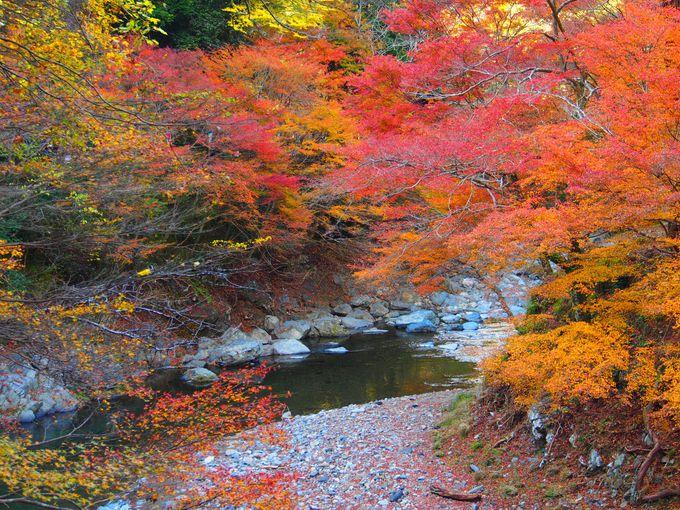 ちょっと散策、清滝川の紅葉