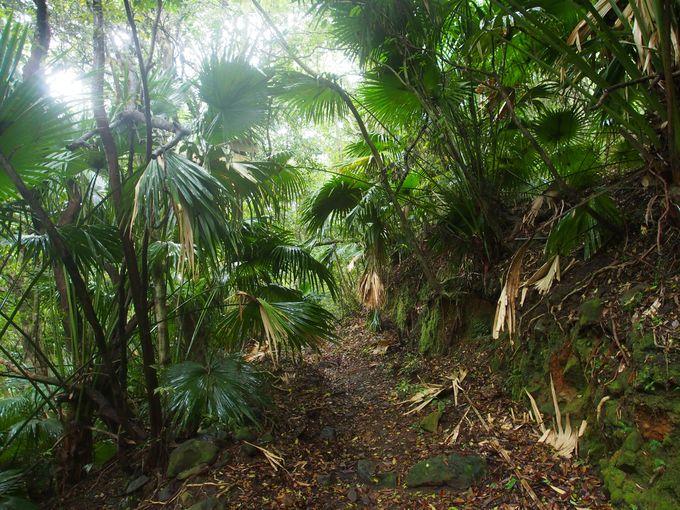 島の歴史と気候を記す、ジャングルの散策路