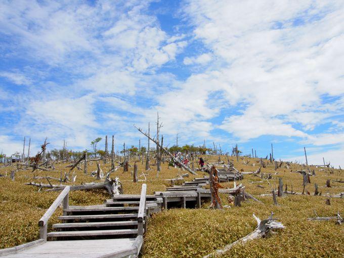 立ち枯れトウヒの広がる「正木峠」、「正木ヶ原」