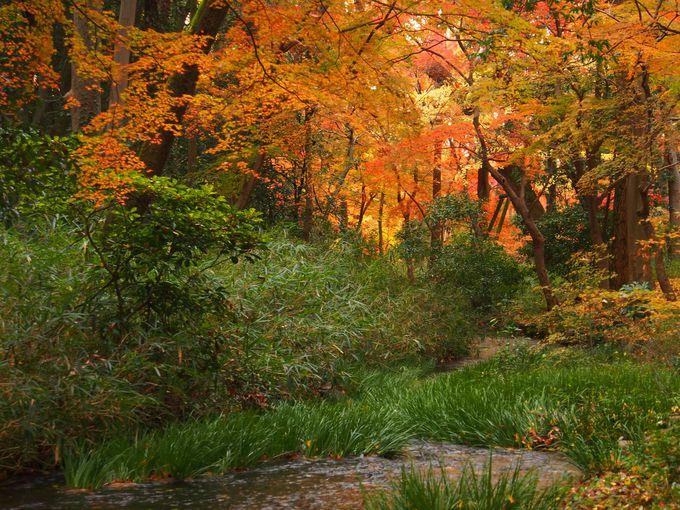 発祥の地、下鴨神社へと続く縄文時代からの原始林「糺の森」