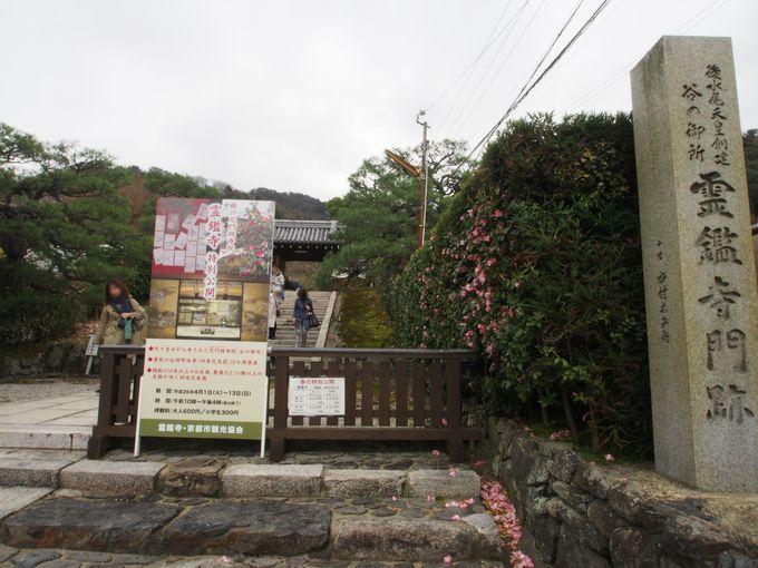 70種類150本の椿が咲き誇る!霊鑑寺